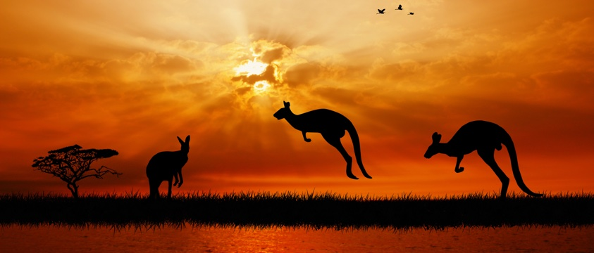 kangaroos hop, sunset in background