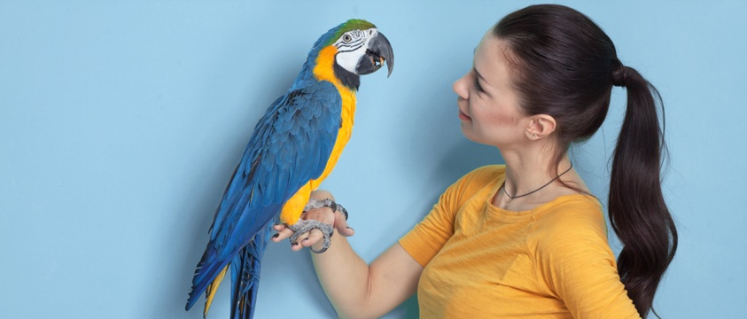 girl with pony tail holds brightly coloured parrot