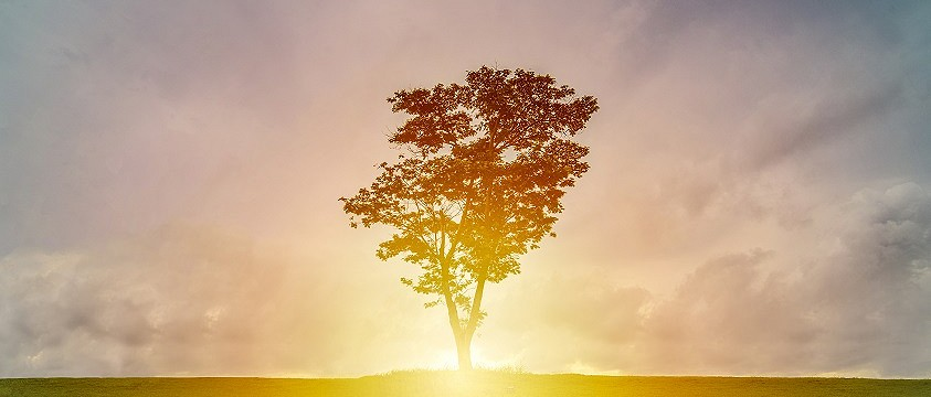 A stock image of a tree in front of a sunset